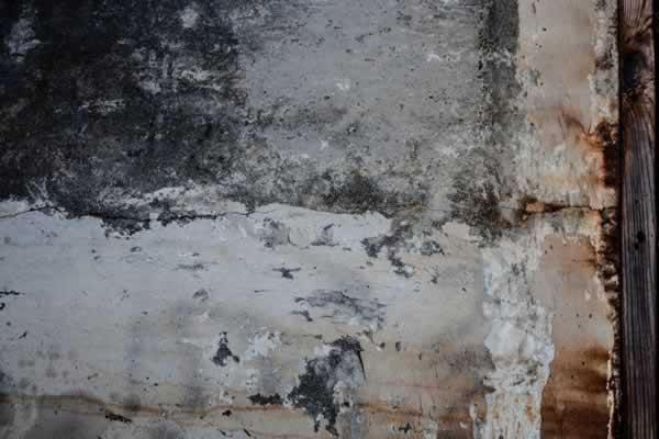 Schimmel verwijderen en opsporen | Renoveren.eu